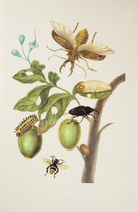 Genipap met palmsnuitkever, rups en eulema amazonebij