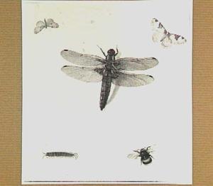 Libelle, duizendpoot, bij en twee vinders