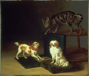 Kat spelend met twee hondjes