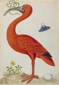 Heuveltje met rode ibis, ei en ganzerik; in de lucht een koningskroonvlinder