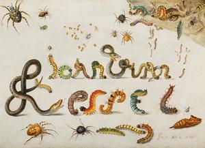 Studie van slangen, rupsen en spinnen in de vorm van de letters van de naam van de kunstenaar: Jan van Kessel