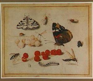 Vlinders waaronder een Atalanta, andere insekten en bessen
