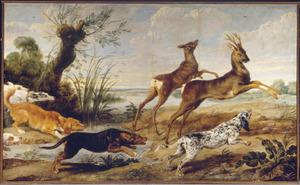Herten worden door honden opgejaagd