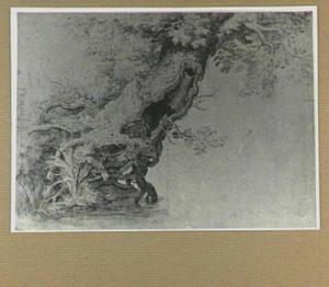 Studie van een holle boom aan het water