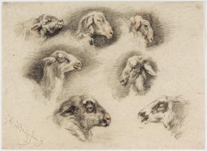 Zeven studies van koppen van lama's en geiten