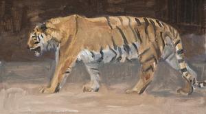 Lopende tijger