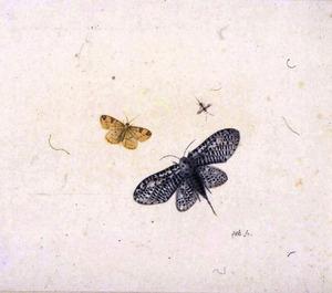 Twee vlinders en een mug