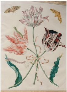 Drie tulpen en oranjebloesem bijgebonden met een roze strik, twee oleanderpijlstaartvlinders en twee rupsen