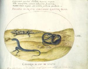 Salamander, slang en fabeldier
