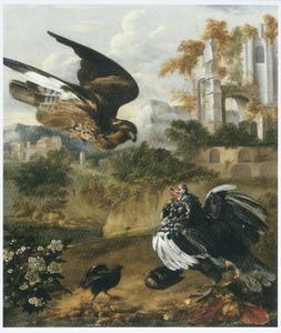 Een kloek, haar kuikens verdedigend tegen een aanvallende havik