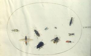Tien insecten waaronder kevers en vliegen