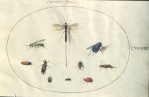 Tien insecten waaronder kevers en een vlieg