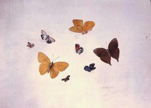 Studie van acht vlinders en motten