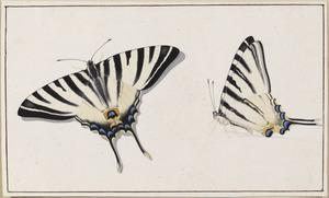 Page-vlinder, vleugels geopend en gesloten  (Papilionidae)