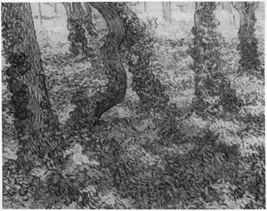 Bomen met klimop