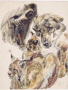 Schetsblad met kat- en wolfachtigen, waaronder lynxen