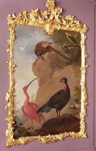 Rode Ibis, Fazant, Wielewaal en een Kuifsjakohoen in een rotslandschap