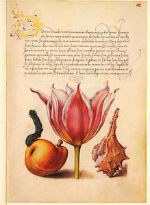 Perzische tulp, peer, brandhoren en slak