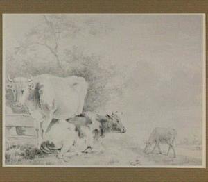 Koeien in een landschap
