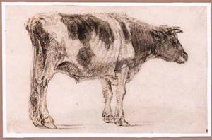 Staande stier, naar rechts