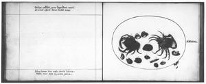 Dertien schaal- en schelpdieren