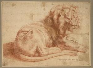 Studie van een leeuw
