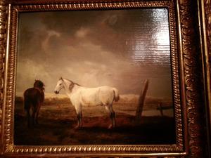 Twee paarden op een weide