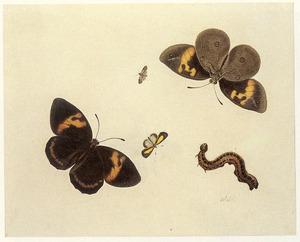 Drie vlinders, een vliegende mier en een rups