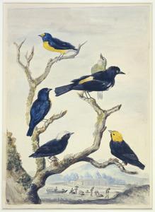 Zes Zuid-Amerikaanse vogels op een boomtak in een tropisch landschap