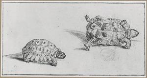 Twee studies van een schildpad en kop van een kat