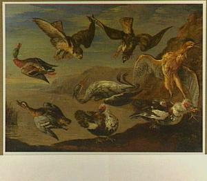 Watervogels, aangevallen door twee roofvogels