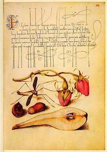 Franse roos, peer, hazelnoot en mug