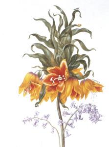 Gele keizerskroon en twee hyacinten