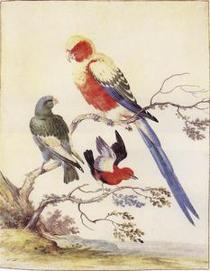 Drie exotische vogels