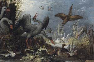 Ooievaars, zwanen en andere watervogeld bij een waterpoel