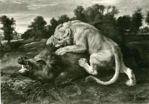 Leeuwin valt everzwijn aan