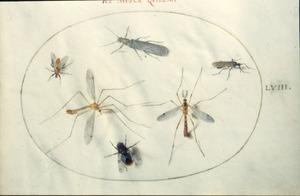 Zes insecten waaronder muggen