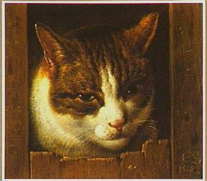 Een kattenkop tussen planken
