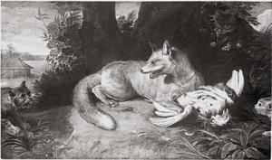 Een vos verdedigt buit tegen wilde katten