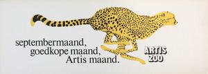 Artis-Septembermaand-Tram-Affiche: Cheetah en profil