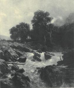 Boslandschap met stroomversnelling