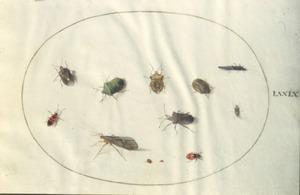 Twaalf insecten, voornamelijk kevers
