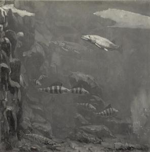 Baars, snoek en andere vissen bij een rotspartij
