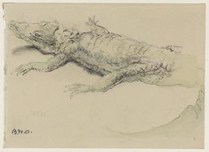Een krokodil in Artis