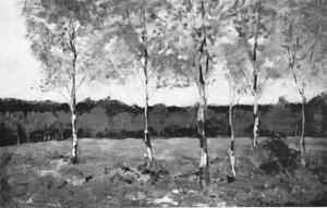 Six young birch trees in a field
