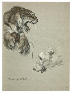 Tijger en ijsbeer