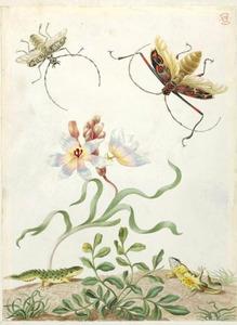 Kamsalamanders, een vliegende hoepelboktor en harlekijnkever rondom een ixia