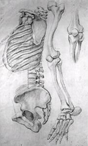 Wervelkolom en het bekken, en profil naar links, beenderen van een linkerbeen van heup tot tenen en een detail van een knie