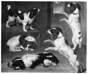 Studie van honden
