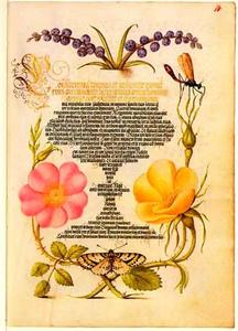 Blauwe druifjes, egelantier, gele roos, bonte bessenvlinder en libel